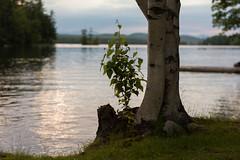 when we meet (jodyanew) Tags: lake maine highland birch bridgton