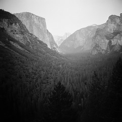 Sea of Trees (takeaquest) Tags: california travel trees blackandwhite mountains film northerncalifornia rock clouds forest mediumformat cliffs adventure nationalforest explore valley yosemite granite delta100 sierranevada graphicdesigner elcap filmphotography elcaptain yashica635 filmisnotdead filmeffect crudorsey takeaquest