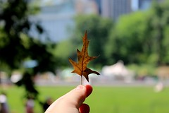 Central Park (francescaganassi) Tags: newyork love nature centralpark