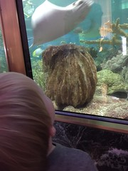 "Paul at Shedd Aquarium • <a style=""font-size:0.8em;"" href=""http://www.flickr.com/photos/109120354@N07/20003519331/"" target=""_blank"">View on Flickr</a>"