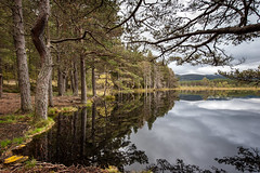 Stillness at Uath (tripowski) Tags: nikon nikond700 d700 1424 1424mm nikkor scotland lake water reflection tree trees forest cairngorms uath lochan uathlochans