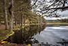 Stillness at Uath (tripowski) Tags: nikon nikond700 d700 1424 1424mm nikkor scotland lake water reflection tree trees forest cairngorms uath lochan uathlochans