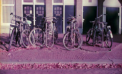 Iconic walk of the city (ale2000) Tags: canonet canon ql19 lomochromepurple lomography amsterdam bikes bicycles bici biciclette parked street film 35mm pellicola analog analogue filmisnotdead believeinfilm fall autumn autunno parking parcheggio urban