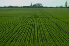 Field of Green (Guy Sleeman) Tags: canon eos 60d ef85mmf18 field farm farmer farming crops growing plant green