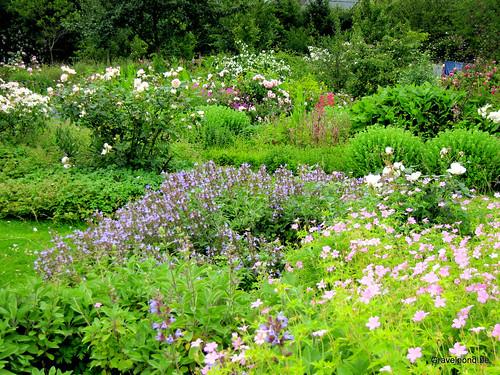 Our garden during Summer
