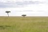 IMGP9675b (Micano2008) Tags: kenia africa pentax parquenacional masaimara acacia paisaje sabana