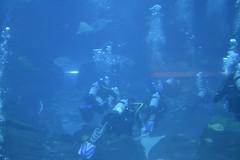 Georgia Aquarium (david.torres.jr@att.net) Tags: georgiaaquarium georiga aquarium fish friends family alligator whales sealions dolphins atlanta hugefishtank
