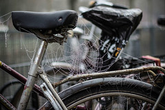 © Inge Hoogendoorn (ingehoogendoorn) Tags: fiets fietsen bike bikes bicycle bicycles dutchbikes cobweb forgottenbike cycling spinnenweb frozen frosty winter cold weather december stilleven stillife