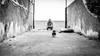 Running Sausage, PT3. (Peppe_Cris) Tags: dachshund dog running white black bw hotdog dogs canon 50mm 6d wiener canon6d canoniani doxie sunset beach water sky red flower nature blue night tree green flowers portrait art light snow sun clouds cat park winter landscape street summer sea city trees yellow lake christmas people bridge family bird river pink house car food old macro music new moon orange garden blackandwhite