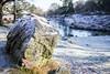 bradgate park - frozen river 2 (grahamdale74) Tags: xmas 2016 alyssia caitlin chel roy joan wetlands