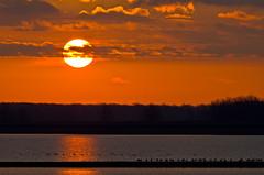 Williams Reservoir (ramseybuckeye) Tags: sunrise williams reservoir canada geese ducks water sky trees allen county ohio