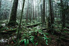 Forest Floor (eric.vanryswyk) Tags: bridge lynn valley canyon north vancouver british columbia canada forest rainforest rain water creek river rapids suspension hike hiking serene cool mist misty green landscape pacific northwest nikon d610 nikkor 20mm f18 outdoor walkway trail