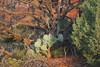 Dawn at Bell Rock landscape (nikname) Tags: trees bellrock sedona arizona sunrise redrocks arizonausa arizonaredrocks bellrocksedonaarizona daw