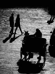 Rome Winter Afternoon (Stefano Avolio) Tags: rome roma winter inverno pomeriggio afternoon sanpietrini biancoenero bw blackwhite blackandwhite monocromo savolio stefanoavolio calesse buggy
