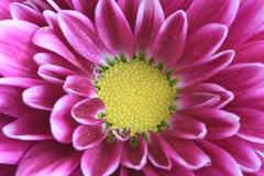 Nature always... (Steven H Scott) Tags: flower plant close macro petals colour organic pattern outdoor