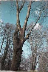 arbres (JJ_REY) Tags: arbres trees leica m8 elmarit 28mmasph colors schoppenwihr alsace france