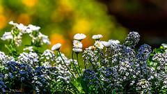Jardins secrets (yann.dimauro) Tags: france secret jardin fr vaulx rhônealpes jardinssecrets
