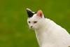 Hinky (TATIUMZI) Tags: france cat chat sony sigma dordogne gato 700 sudouest sigma300mm aquitaine hinky sigma300f4 sonyalpha alpha700 sonyalpha700 montponménestérol