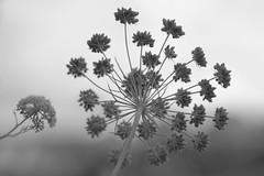 Big and small (pintoamaralricardo) Tags: natural fractal
