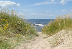 To the sea (Jevgenijs Slihto) Tags: sea mer praia beach strand mar sand meer mare areia sony dune laut sable playa arena duna plage  deniz  spiaggia kum riga pantai dne pasir sabbia  bin   morze  plaa  plaj  piasek    bi ct wydma     kumul bibin     daugavgriva kumullar hx300 sonyhx300