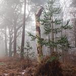 Chobham-Place-Woods