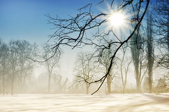 the morning light  in my life.. (eggii) Tags: lodz winter park parknadjasieniem light sun snow morning gree trees branches fog mist mood