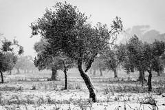 snow tales #02 (C*D*F) Tags: neve fiocchi bianconero blackwhite snow snowflakes