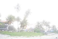 Alleppey's beach (yellaw travel) Tags: india inde kerala alleppey noix de coco palmier cocotier sun soleil