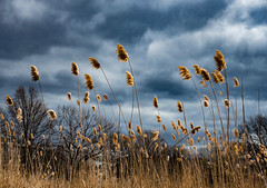 The Fens (and read caption for discussion of camera choices!) ((Jessica)) Tags: rx100 sony mark3 markiii fens thefens boston fenway tallgrass moody moodysky clouds stormclouds winter massachusetts newengland sky back bay backbayfens backbay