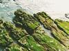 Rocas, algas, y mar.  Rocks, Algaes, & sea. (Cataleojo) Tags: playa costa mar oceano agua rocas olas algas rocks algae sea