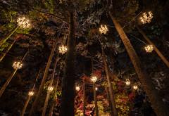 illumination (Jovan Jimenez) Tags: sony ilce a6500 emount 12mm f28 6500 zeiss touit alpha illumination tree lights the morton arboretum night light chandelier outdoors outside nature hdr carl magic