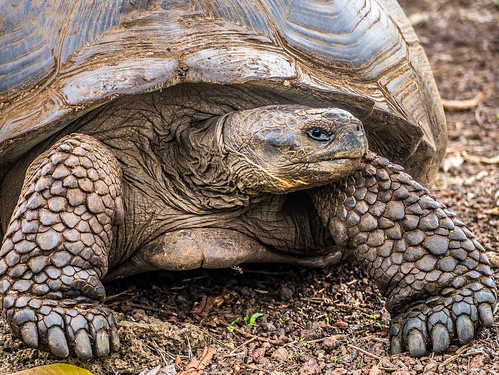 """Galapagos-9.jpg • <a style=""""font-size:0.8em;"""" href=""""http://www.flickr.com/photos/91306238@N04/32094162810/"""" target=""""_blank"""">View on Flickr</a>"""