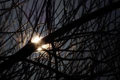 The January sun on a frosty morning. (detlefgabriel17) Tags: sun sonne gegenlicht backlight tree baum winter morgen morning frost frosty