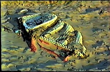 sturmflut 89NDVD_019