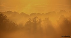 Golden hour (flintframer) Tags: sunrise fog muscatatuck nwr nature landscape golden hour sun rays trees layers canon eos t5i tamron 18270mm