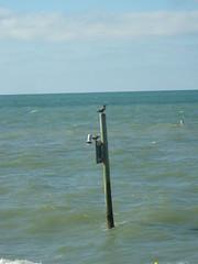 Clearwater Beach 15-12-16 - 11 (s.kosoris) Tags: skosoris pentaxoptiowg1 wg1 pentax clearwaterbeach clearwater florida water ocean atlanticocean gulfcoast bird