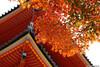 Kiyomizu-dera (Red Cathedral has left Osaka) Tags: sonyalpha a77markii a77 mkii eventcoverage cosplay alpha larp sonyslta77ii slt evf translucentmirrortechnology alittlebitofcommonsenseisagoodthing kiyomizudera 清水寺 pagoda butto sony japan nippon nihon osaka kansai tempel scyscraper temple wolkenkrabber gratteciel japon fall autumn automn herfst leaves maple ginkgo colours red yellow geel rood coleur color wanderlust travel travelling november digitalnomad coloursoffall architecture shrine shinto buddist thelandofopposites asia voyage voyagedetective buddhist international japanairlines kyoto kioto