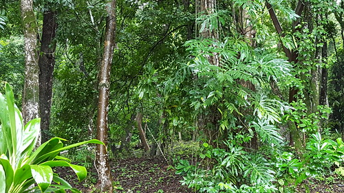 Rainforest near San Ignacio, Belize