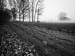 Chemin d'hiver (steph20_2) Tags: panasonic gh3 714 m43 lumix monochrome monochrom paysage campagne countryside picardie oise chemin noir noiretblanc ngc blanc black bw white skanchelli