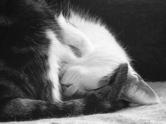 Sleeping cat (Pat's_photos) Tags: pet cat bw