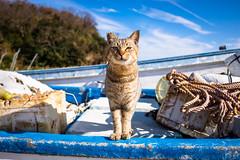 thrivers on islands #85 (Ogi Island, Kagawa) (Marser) Tags: xt10 fuji raw lightroom japan kagawa island cat boat fineweather 香川 男木島 猫 貓