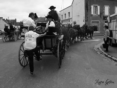 Hey! give me a place over there ( explore 6-6-15 ) (Marie Jestin) Tags: street cheval bretagne britanny rue breton pentecote landivisiau attelage chevalbreton drafhorse