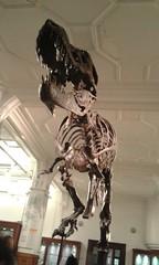 Stan the T-Rex (MissHirstwood) Tags: skeleton fossil dinosaur stan trex tyrannosaur manchestermuseum