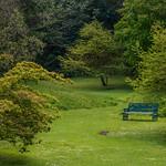Lush Green Park thumbnail