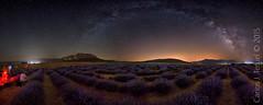 Lavenders under the Milky Way (Carlos J. Teruel) Tags: nikon murcia cielo panoramica nocturnas milkyway lavanda 1835 lavenders vialactea nikon1835 xaviersam carlosjteruel d800e nikonafsnikkor1835mmf3545ged
