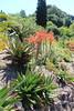 IMG_4543 (cheryl's pix) Tags: california berkeley botanicgarden botanicalgardens botanicalgarden botanicgardens berkeleyca berkeleybotanicalgarden ucbotanicalgarden universityofcaliforniabotanicalgarden universityofcaliforniabotanicalgardenatberkeley