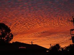 Sunset (pat.bluey) Tags: sunset that outside is australia stunning newsouthwales sight truly 1001nights myhome mackerelsky 1001nightsmagiccity