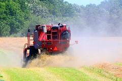 oats harvest along Prairie Farmer Trail IA 854A6913 (naturalist@winneshiekwild.com) Tags: county harvest reis iowa trail larry farmer prairie oats winneshiek