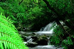Anamudi Shola National Park (Prashob adithiruthy) Tags: park morning wild nature nikon wildlife ngc kerala national shola munnar waterfal nikon5100 nikon70300 topstation kundala anamudi flickrandroidapp:filter=none anamudisholanationalpark