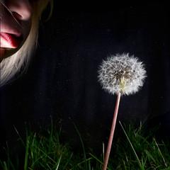 26/365 The last dandelion (Mathias Wennergren) Tags: sky plant flower girl grass night garden stars kid child blow dandelion 365 project365 365project